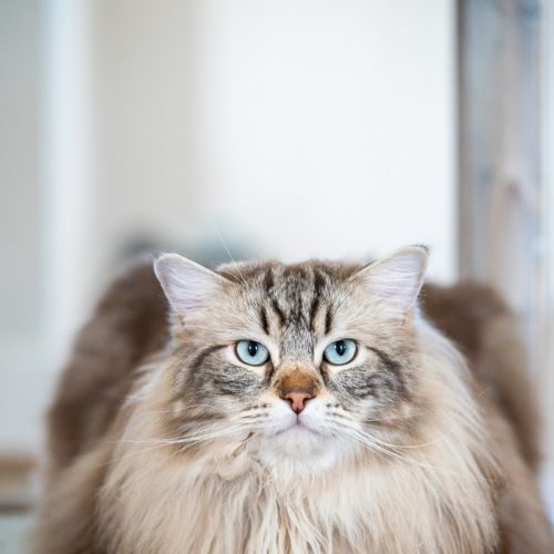 Engaging Tails:  Baloo, London & the Cats | Raleigh, NC