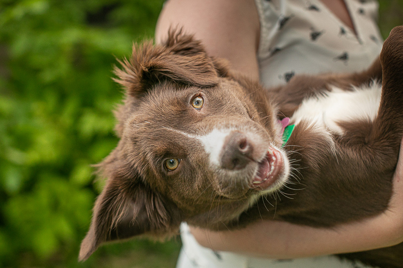 silly puppy, woman holding puppy | ©K Schulz Photography | lifestyle Minnesota Pet Photography