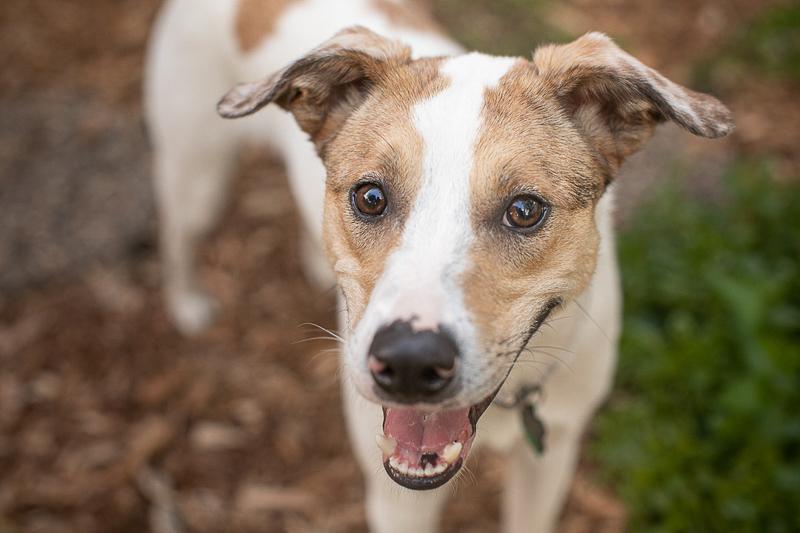 happy mixed breed dog, lifestyle dog photography ideas | ©K Schulz Photography