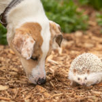 Happy Tails:  Dogs and Hedgehogs