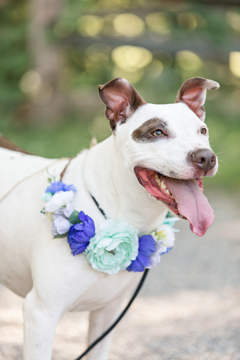 adorable mixed breed dog wearing floral wreath, dog photography ideas | ©Limelight Entertainment