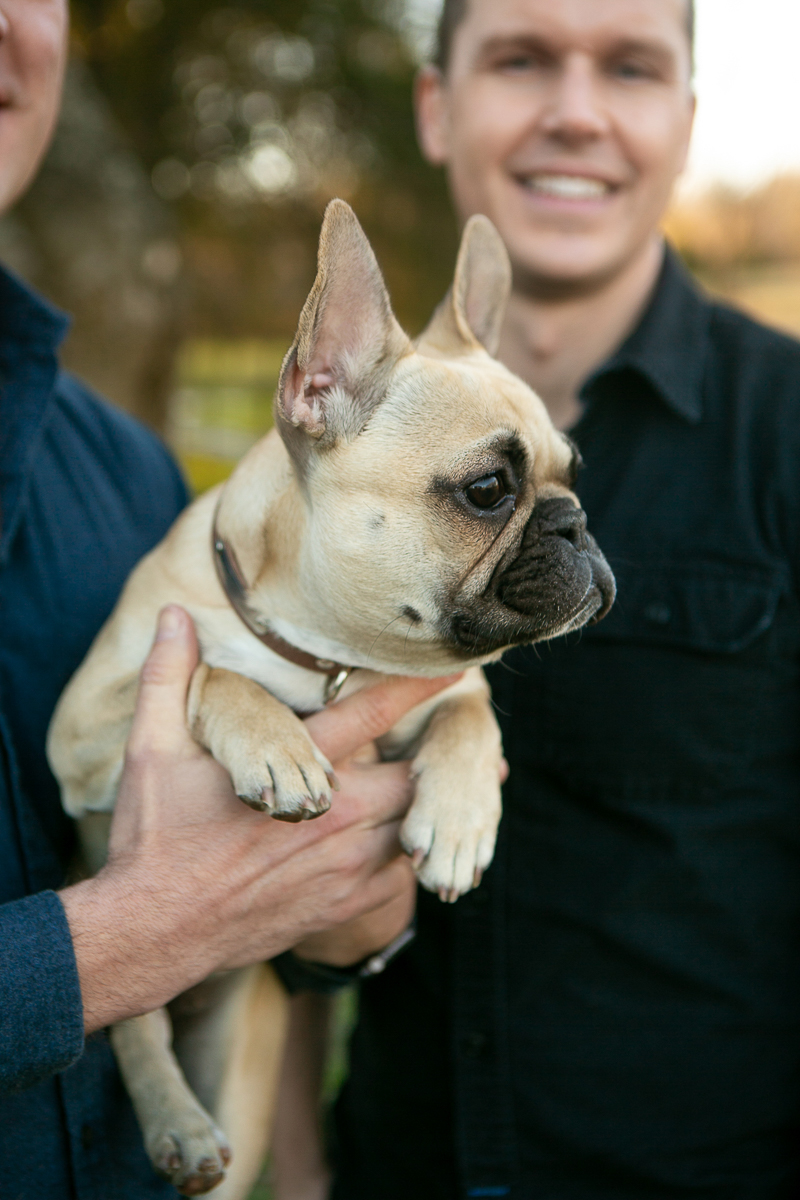 adorable Frenchie and her humans | ©Mandy Whitley Photography, College Grove, TN