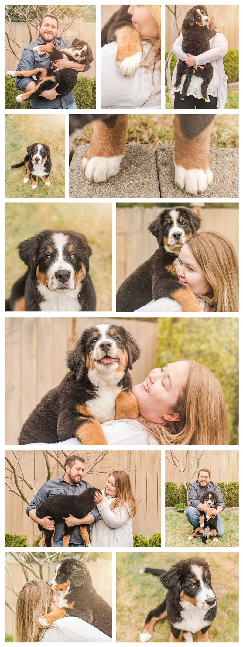 dog-friendly family photos with a puppy, Berner | ©Pearls & Pines Photography | lifestyle pet portraits, Seattle, WA