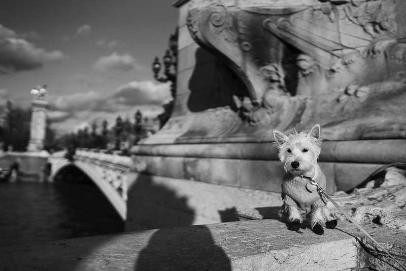 adorable dog Pont de Alexander III | Février Photography