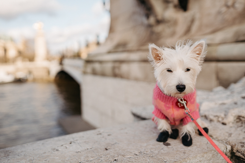 Westie wearing pink and coral sweater, Pont de Alexander III | Février Photography