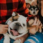 Dog-friendly Holiday Photos | Phoenix, Arizona