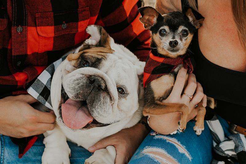 holiday photos with dogs | © Ali Tso Photography | Phoenix, AZ