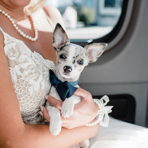 Best Wedding Dogs:  Mia & Oliver | Tampa, FL