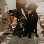 Dog-friendly Engagement Session | Mesa, AZ