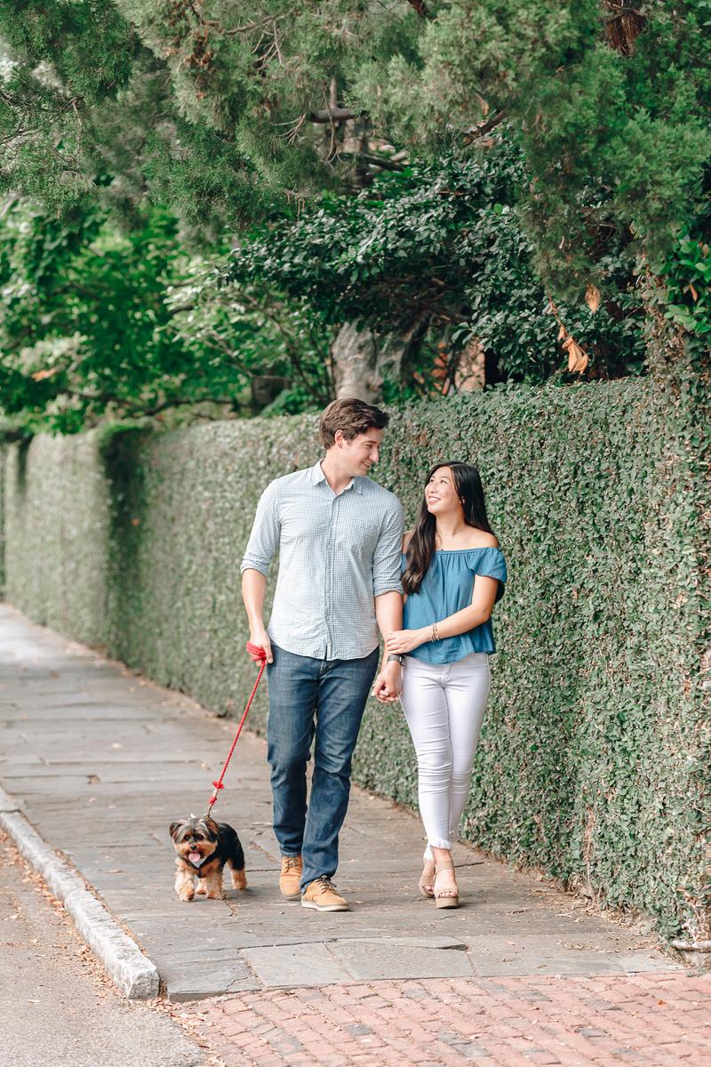 Yorkie walking with engaged couple on hedge lined sidewalk, lovely engagement session, ©Charleston Photo Art