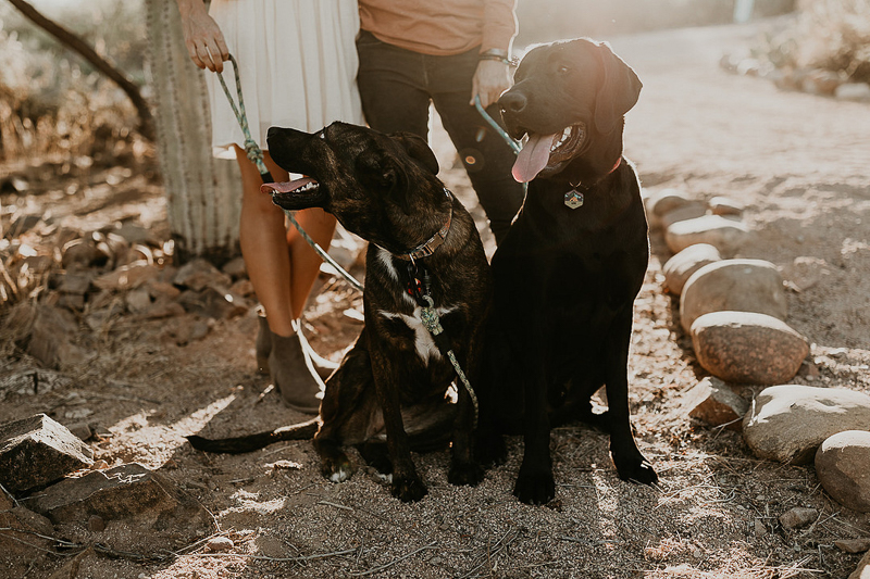 dogs sitting, engagement portraits with pups | ©Kali M Photos | Arizona wedding and elopement photographer