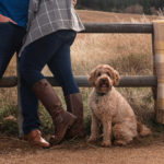 Engaging Tails:  Molly the Doodle | Chautauqua Park
