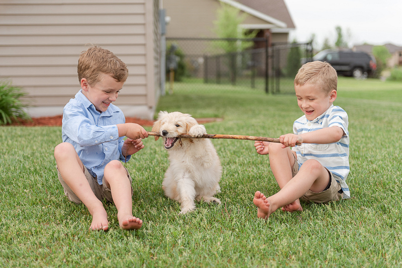 2 brothers holding a stick for their puppy, lifestyle photography ideas, kids and dogs, ©Samantha Rule Photography | dog-friendly family portraits, Central MN