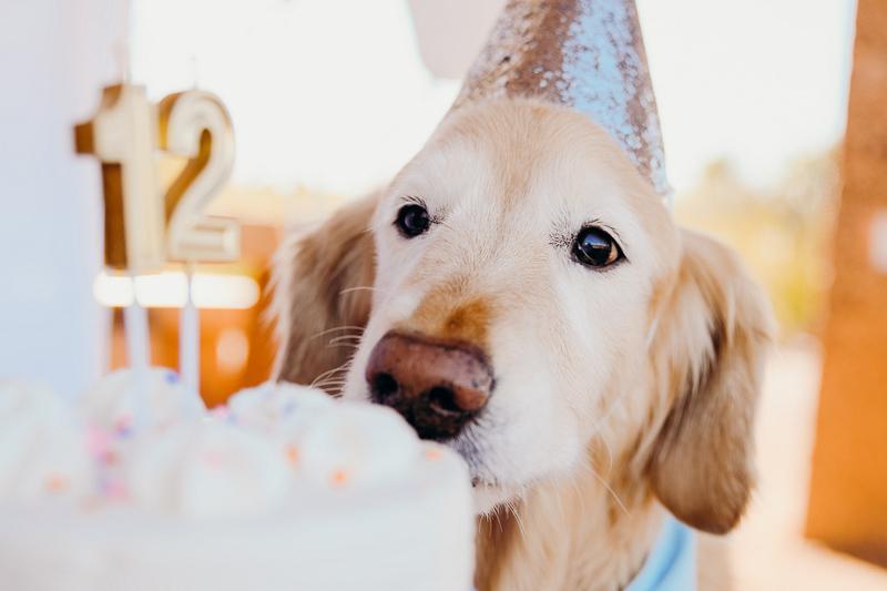 dog sniffing birthday cake | ©Ali Tso Photography