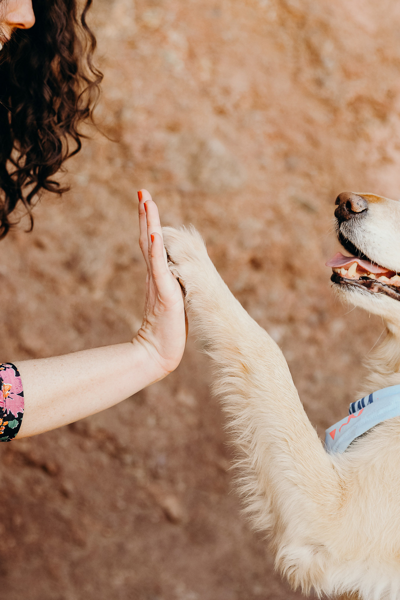 dog and woman high fiving, love between dogs and humans | ©Ali Tso Photography
