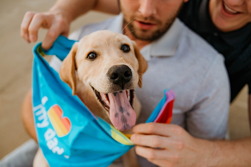man putting bandana on puppy, ideas for including puppies in couple's photos | ©Stevie Nicole Photography