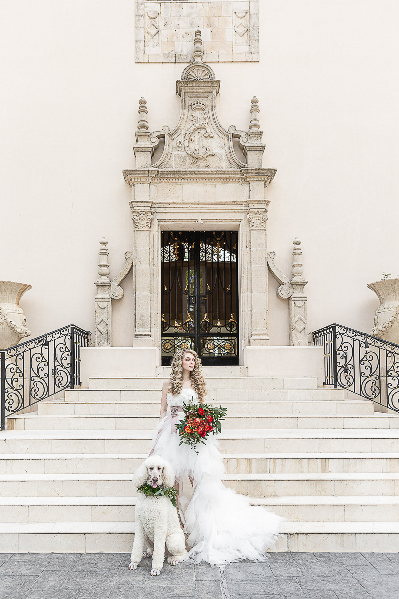 bride holding bouquet of red flowers, white Poodle at her side, ©C. Baron Photography