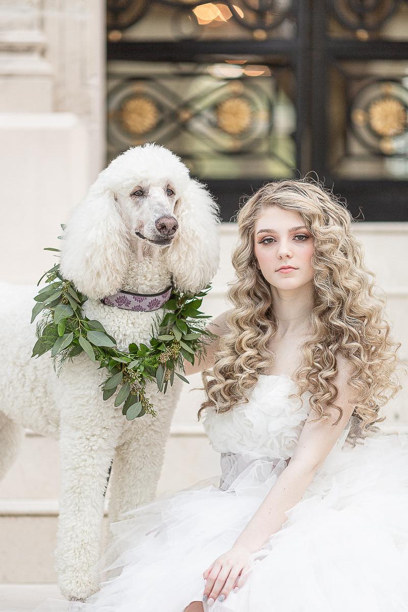 white Poodle and bride, dog-friendly bridal portraits | ©C. Baron Photography