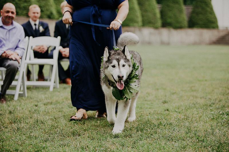 """handsome Husky """"flower dog"""" walking down the aisle, ©McKenzie Bigliazzi Photography, wedding dog, Allerton Park & Retreat Center"""
