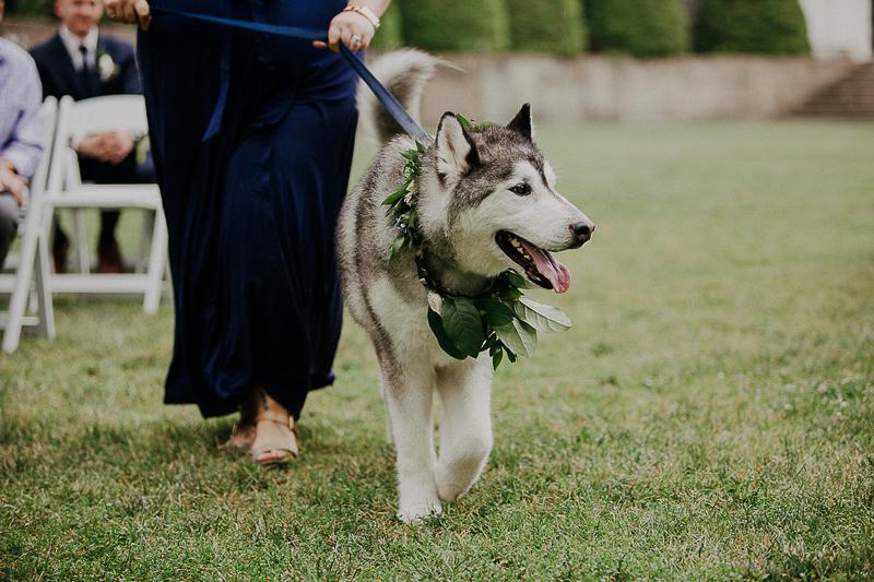 Husky wearing floral collar, wedding dog, ©McKenzie Bigliazzi Photography