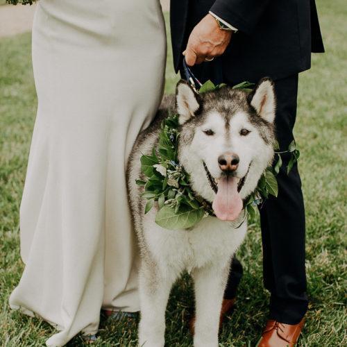 Best (Wedding) Dog:  Yukon the Husky | Allerton Park,