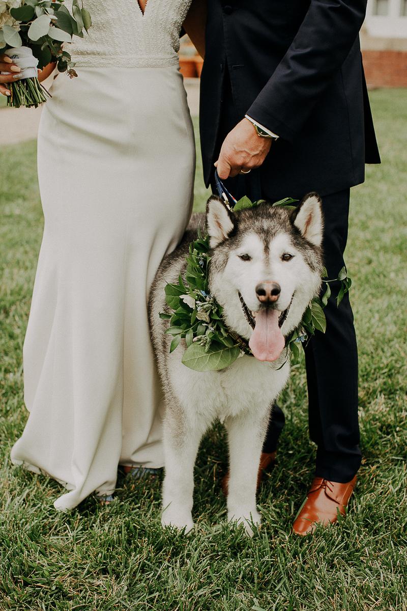 bride and groom and their dog, Husky, ©McKenzie Bigliazzi Photography| Allerton Park
