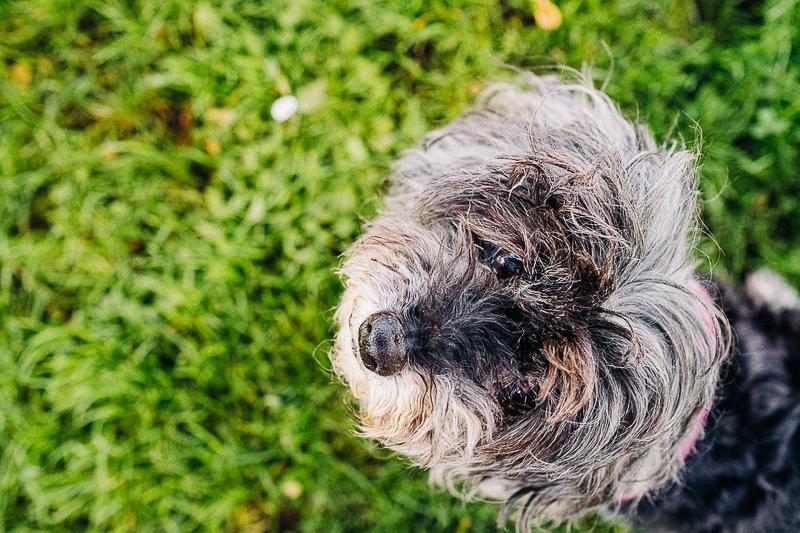 cute senior dog | ©misterdebs photography | Bay Area dog photography