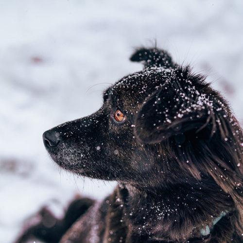 Happy Tails:  Ekko | Brian Head, Utah