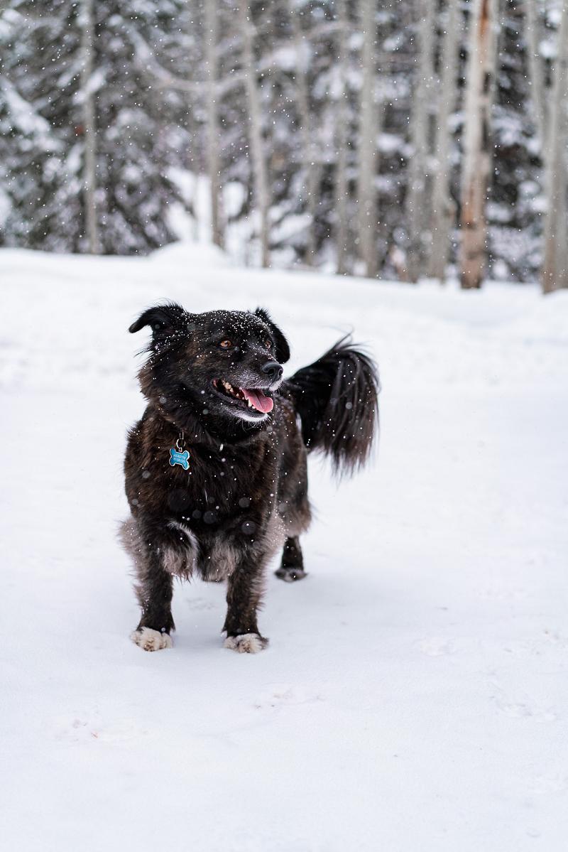 happy mixed breed in the snow, ©AW Creates. Brian Head, Utah