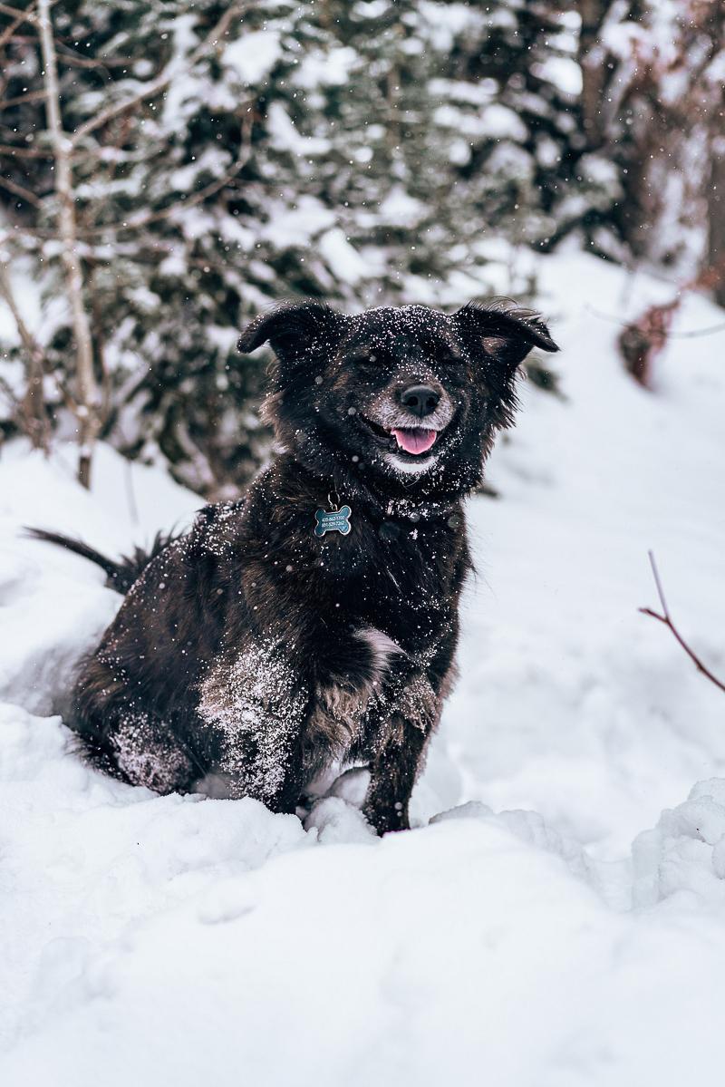 cute black dog sitting in snow, ©AW Creates | Brian Head, Utah