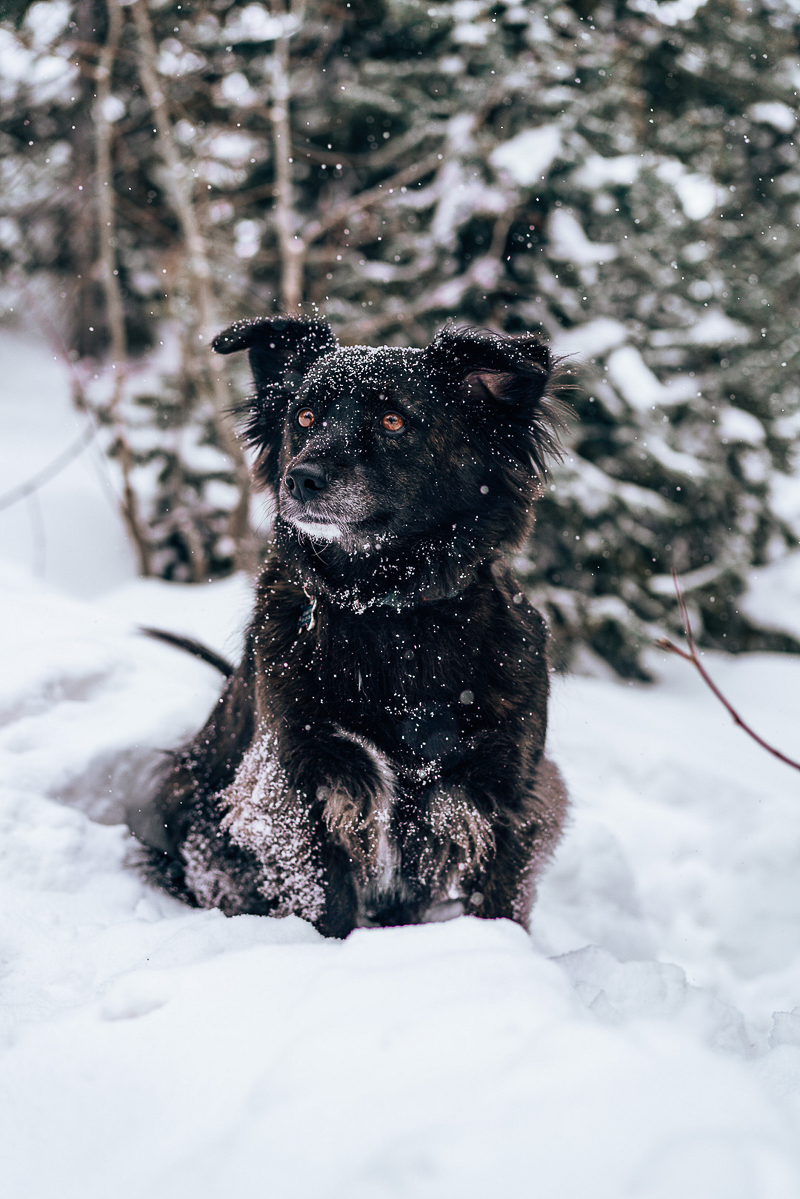 handsome dog sitting in snow, winter dog photography ideas   ©AW Creates