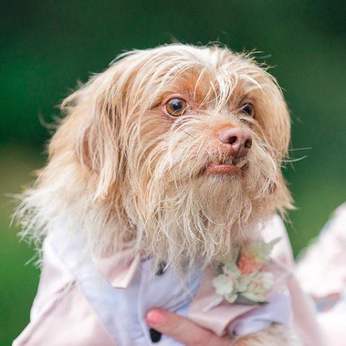 Best Wedding Dog:  Frodo | Hampton Park, Charleston, SC