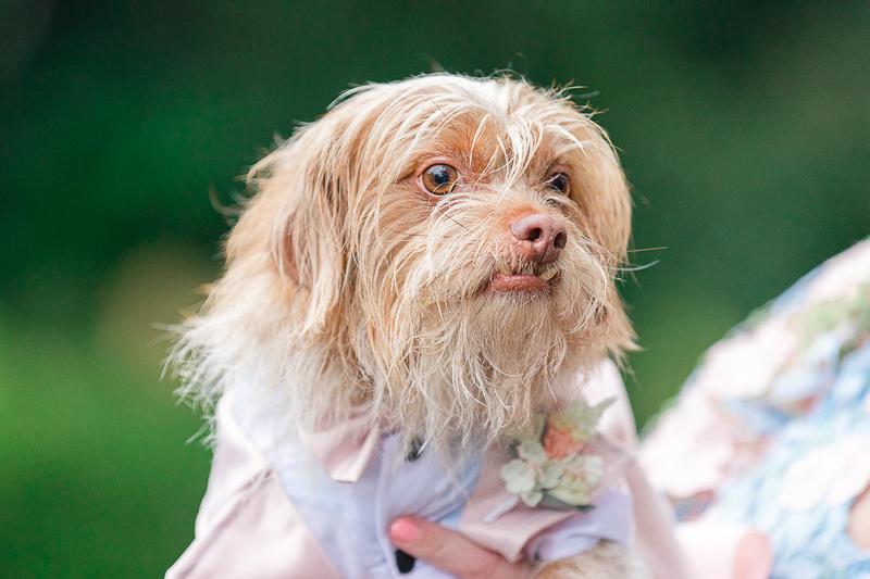 Rescue dog included in wedding, Pekingese, Dachshund, Shih-Tzu mix | ©Charleston Photo Art