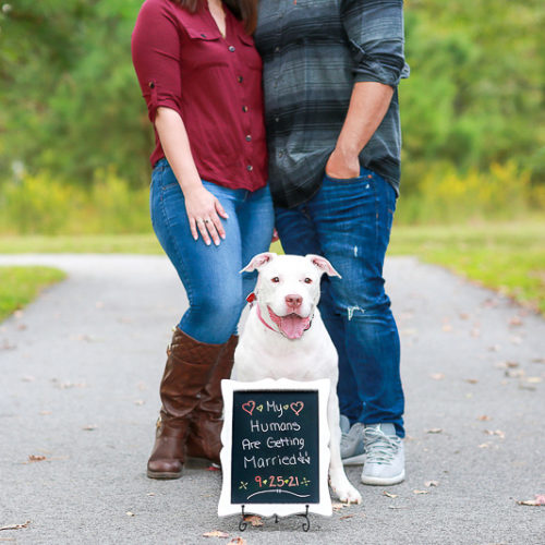Dog-friendly Engagement Portraits | Virginia Beach, VA