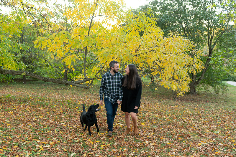 Black lab and couple walking through the leaves, fall engagement portrait ideas ©Jess Sinatra Photography | dog-friendly engagement portraits