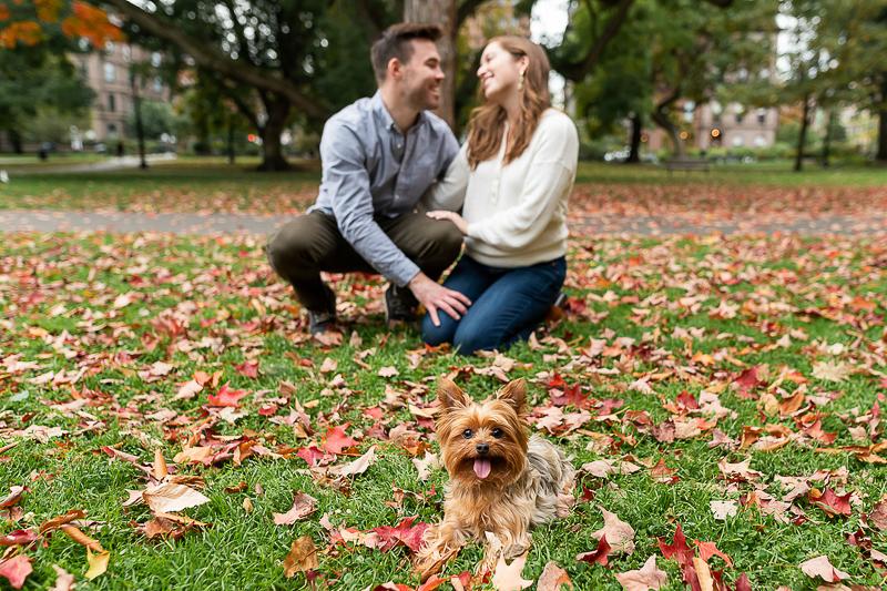 Yorkie, fall engagement photos at Boston Public Garden | ©Jess Sinatra Photography