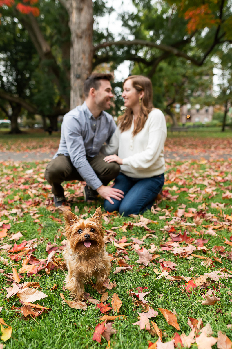 dog-friendly engagement session with a Yorkie | Boston Public Garden ©Jess Sinatra Photography