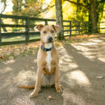 Puppy Love:  Toa the Adorable Pup | Brentwood, TN
