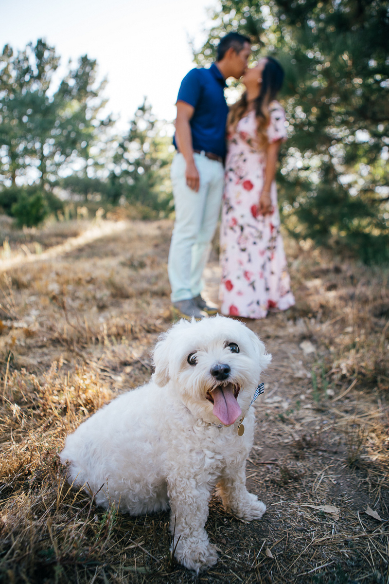Maltese mix sitting in front couple, dog-friendly engagement photos | ©Stephanie Fong Photography