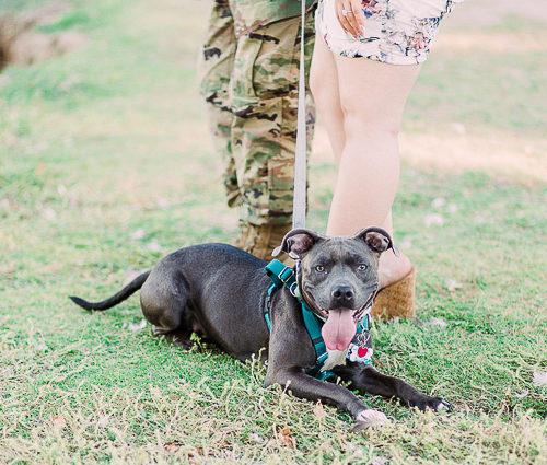 Dog-Friendly Engagement Session | Las Vegas, Nevada