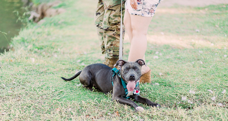 dog-friendly engagement session with pit bull | ©Fig + Willow Studios