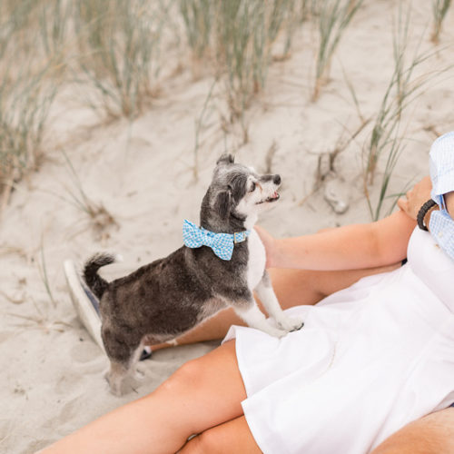 Dog-friendly Engagement Photos | Newport, RI