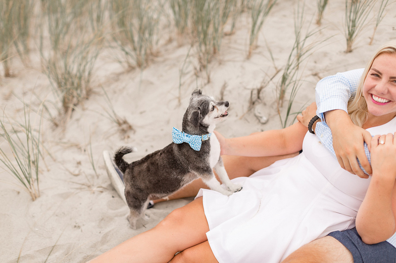 cute mixed breed wearing blue and white bow tie, lifestyle dog photography | ©Coli Michael Photography