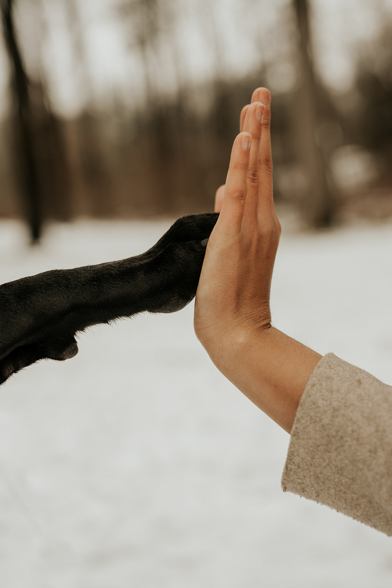 high five dog and human, paw to hand, lifestyle dog photography ideas | ©Tomo.photography | London, Ontario