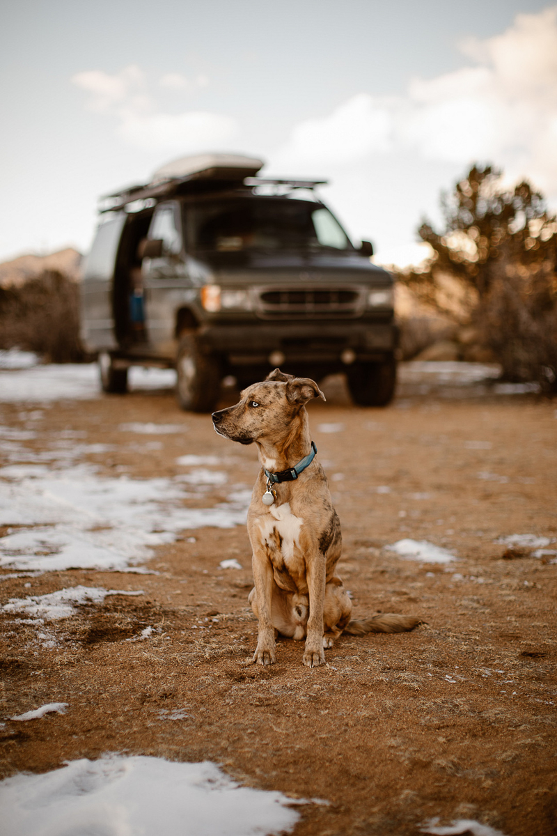 Catahoula Leopard Dog sitting in front of van, Buena Vista, Colorado | ©In Love And Adventure - Elopement Photography