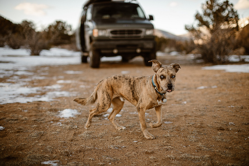 camping with Catahoula Leopard Dog, Buena Vista, Colorado | ©In Love And Adventure - Elopement Photography