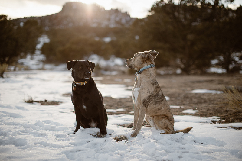 lifestyle dog photography, Buena Vista, Colorado, ©In Love And Adventure - Elopement Photography