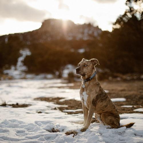 Snowy Dog Portraits | Buena Vista, Colorado