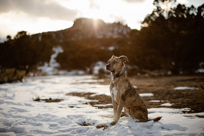 Catahoula Leopard Dog sitting in snow, Buena Vista, CO | In Love And Adventure- Elopement Photography