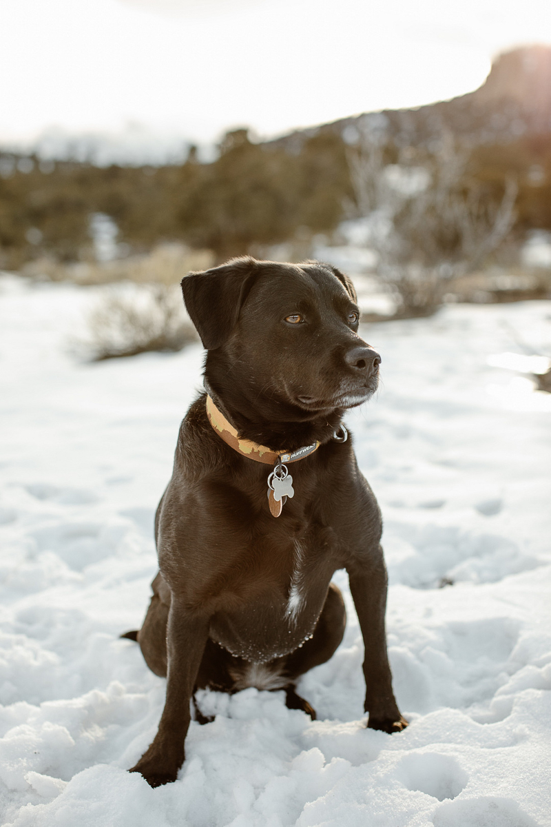 Black Lab mix sitting in the snow, ©In Love And Adventure - Elopement Photography